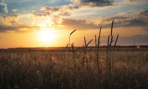schöner Sonnenuntergang über den Feldern in Österreich - Novis
